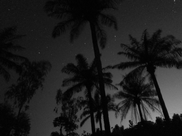 Nighttime – Palm Trees